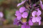 dew drops on purple flowers