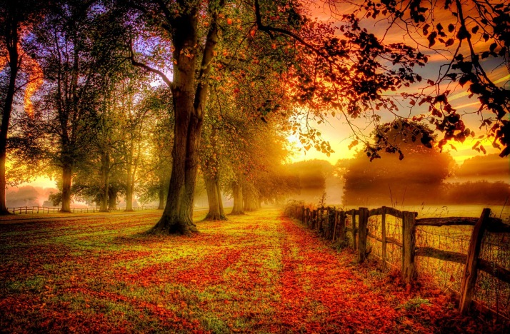 majestic-autumn-nature-landscape
