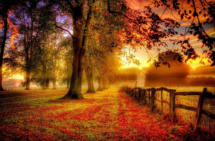 majestic-autumn-nature-landscape